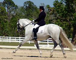 andalusian dressage