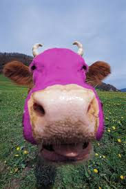 purple cow pictures