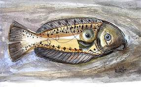 flounder fish pictures