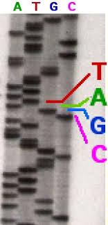 sequencing gel