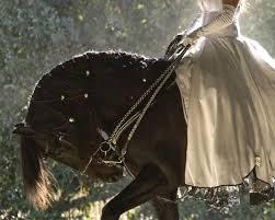 horses fashion