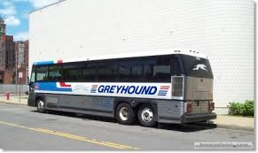 greyhound bus images