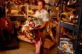 illegal tiger trade
