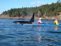 kayak orca