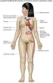 lymphatic