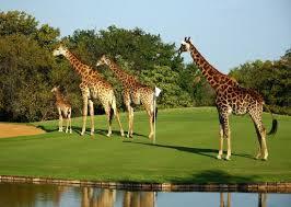 golf resort south africa