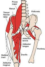 pulled adductor