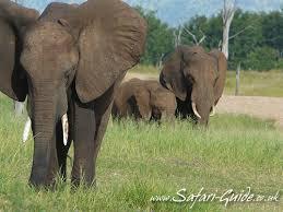 elephants photographs