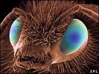 bees eye