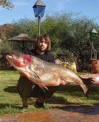 big head carp
