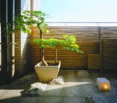 potted japanese maple