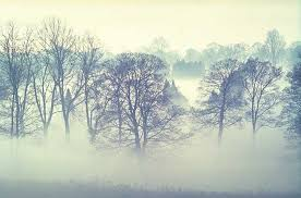 fog pictures