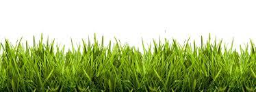grass gif
