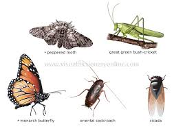 picture insects