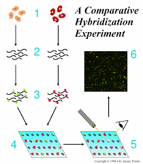 gene expression arrays