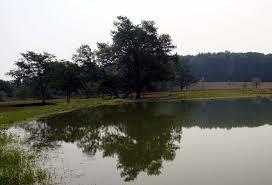 large pond design