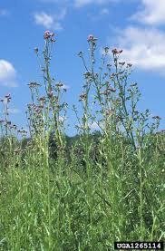canada plants