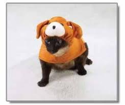 cat dog costume
