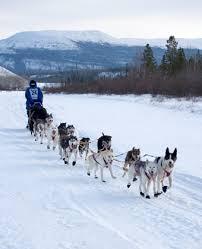 iditarod dog sleds
