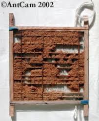 ants habitats