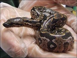 baby snake pictures