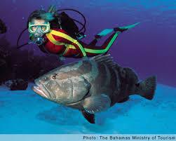 scuba diving bahamas