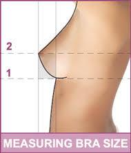 sized bra