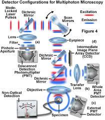 multiphoton excitation