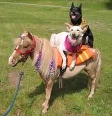dog pony