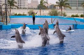 dolphins doing tricks