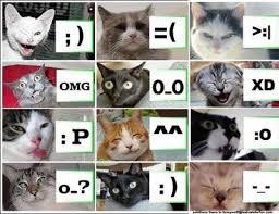 cat smilies
