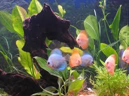 discus aquarium setup