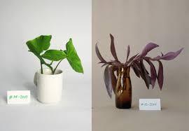 vintage plant