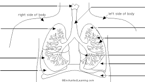 labeled lung