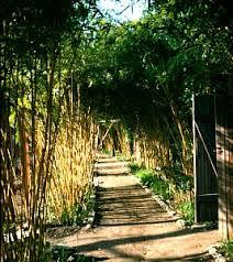 bambusa alphonse karr