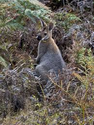animals that live in new zealand