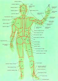 picture of the anatomy of the human body
