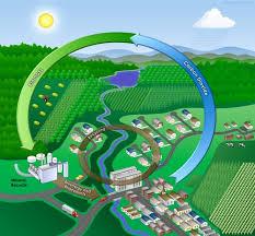 biomass electricity