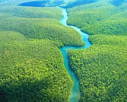 brazilian amazon forest