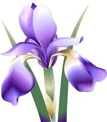 iris pictures