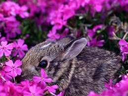 free bunny wallpaper