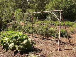 homemade tomato cages
