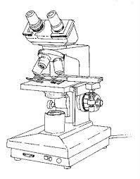 dibujo de microscopio