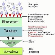 amperometric biosensor