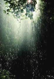 climate of rainforests