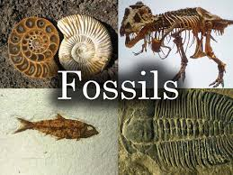 picture of fossils