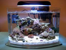 picotope aquarium