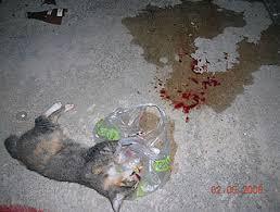died cat
