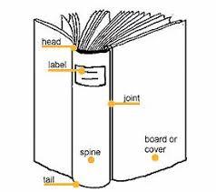 book of anatomy