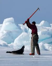 canadian seal hunters